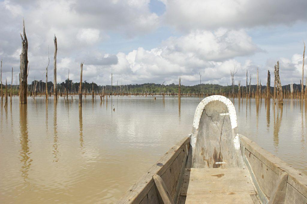 Een reis door de natuur van Suriname