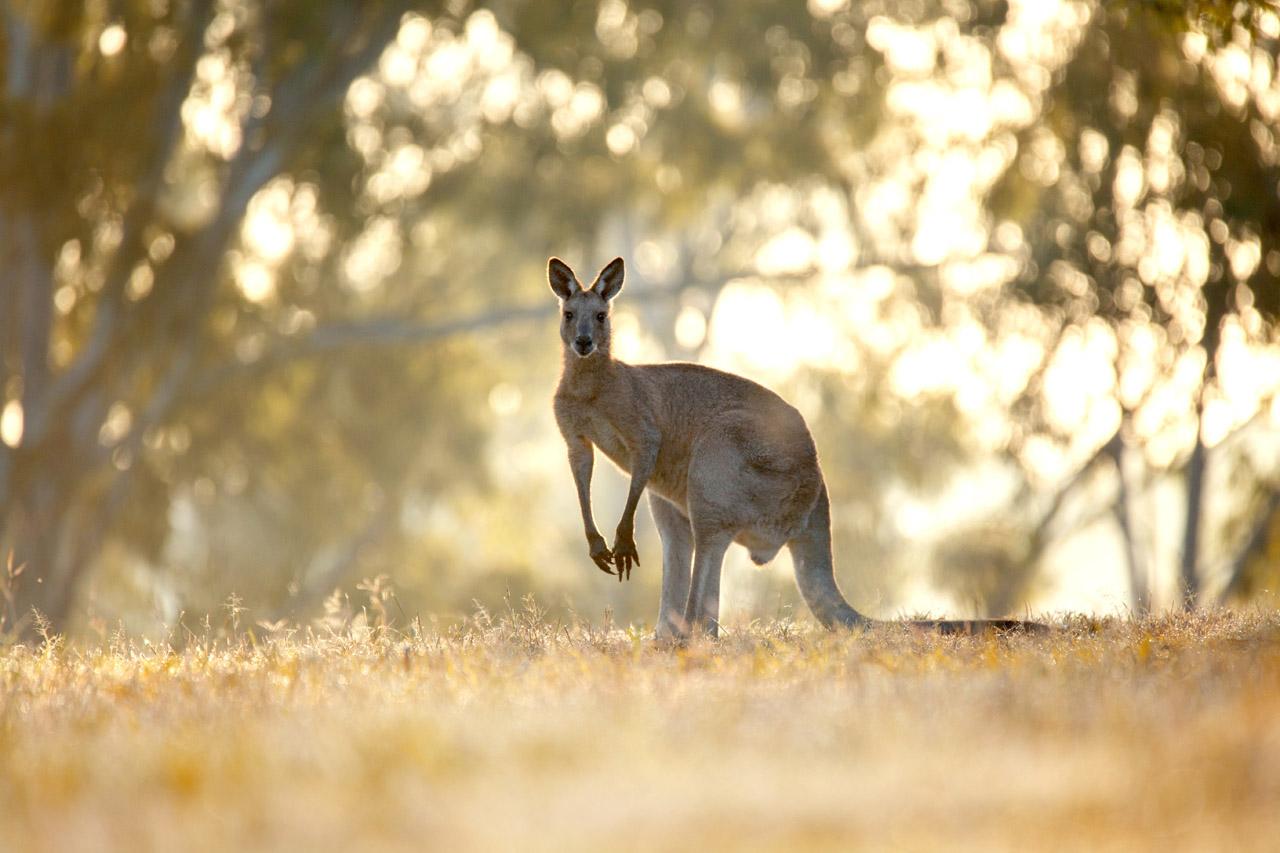Roadtrip met de camper naar Australië